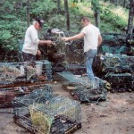 The Lobstah Cages